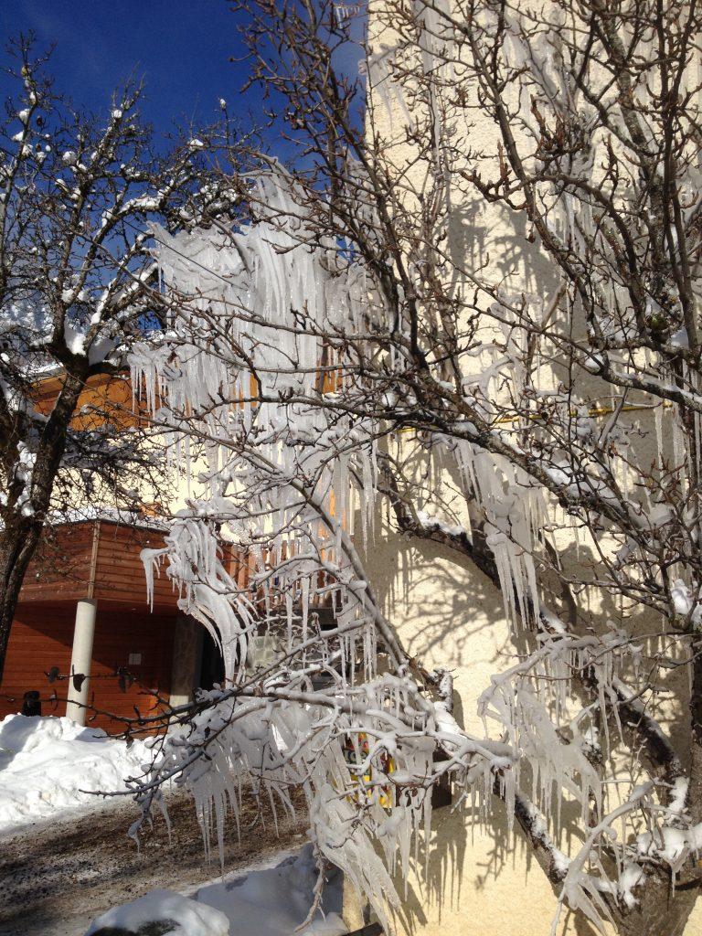 Photo d'un arbre avec des bouts de glaces pointu