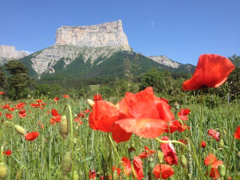 Les Mont aiguille avec une vue sur un champ de fleurs